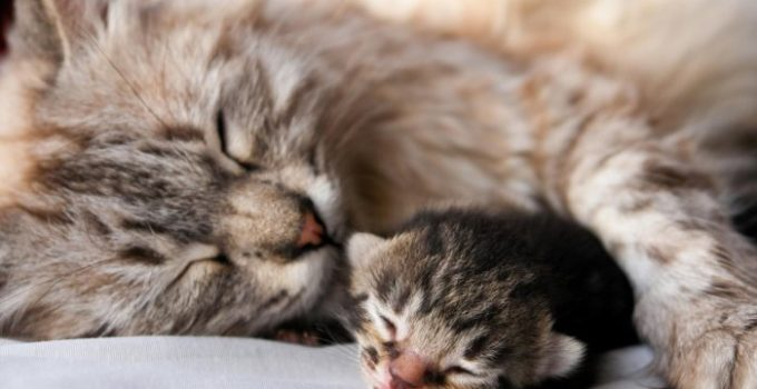1542603122_baby-cat-sleeping-wallpaper-1600-900-6520